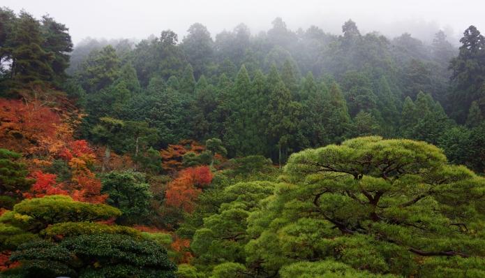 rain forest II.