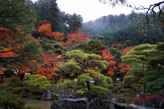 kyoto rain forest