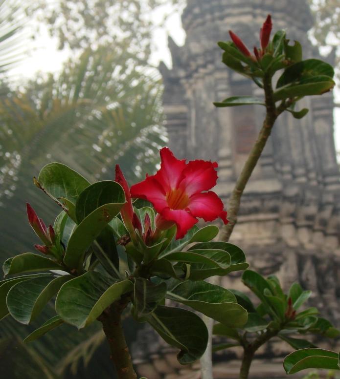 templeflowers / sakon nahkon . siam 2546
