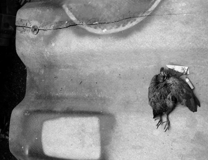 empty bird / rio tejo . portugal 2547