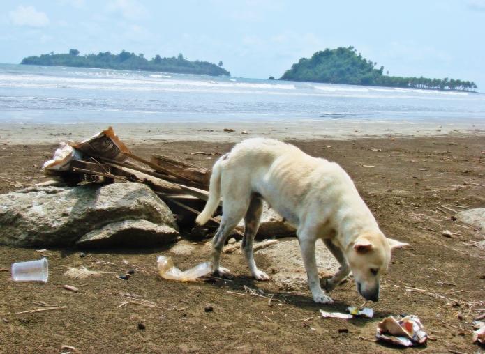 hundstage / sumatra . indonesia 2550