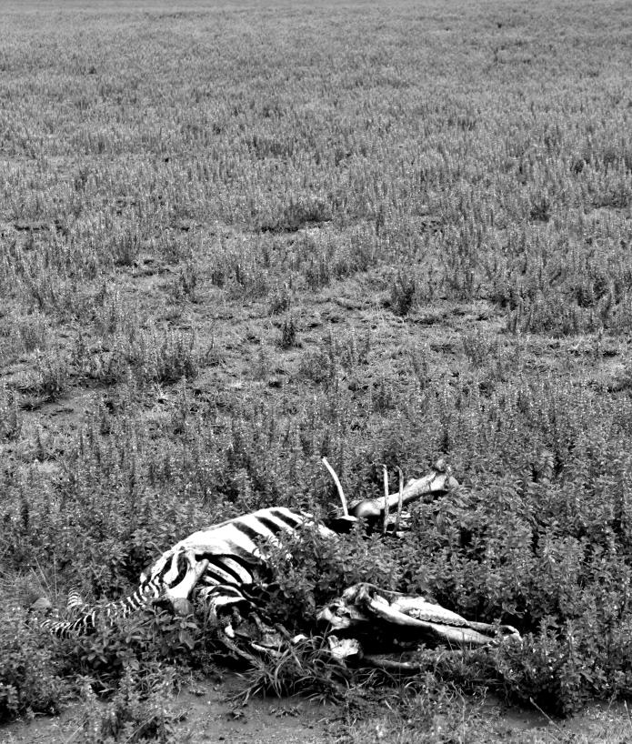 and a new circle began / ngorongoro . tanzania 2551