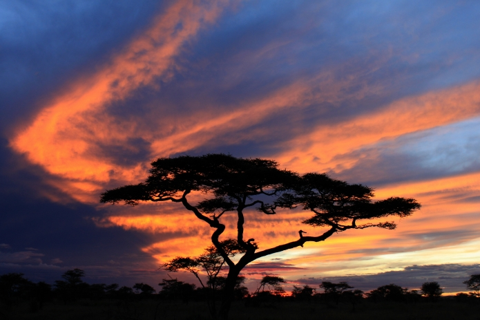 kitchy sunset / serengeti . tanzania 2553