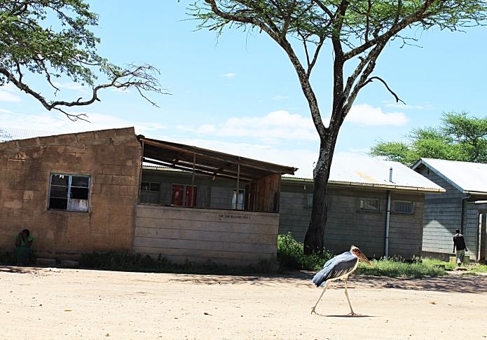 strange bird / serengeti . tanzania 2551