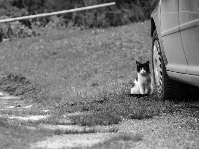 äs büsi / a cat