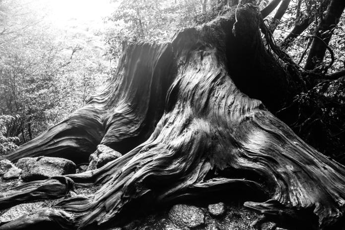dead root