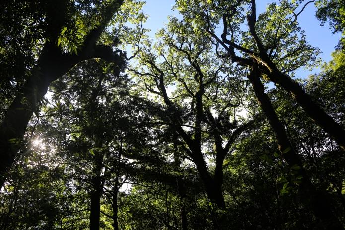 miyanoura forest